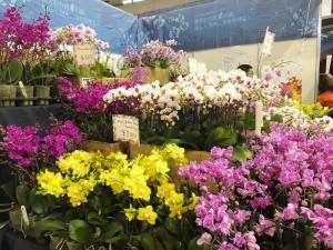 來自台灣的蘭花受到許多日本消費者的喜愛