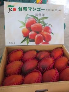 日本向けマンゴー。
