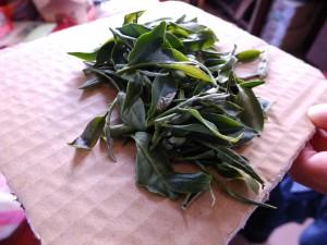 東方美人の茶葉。白くなったところはウンカの食害に遭った部分。