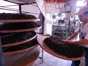 発酵工程に取り掛かる許時穏さん。