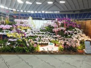 行政院農業委員會社團法人台灣蘭花產銷發展協會設計的蘭花展示,獲得海外獎勵賞
