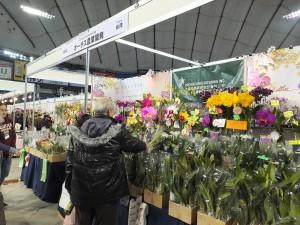 在開幕前一天的內覽會中,台灣業者的攤位前就有不少客人前來選購蘭花