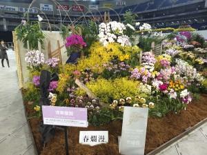 台灣業者「清華蘭園」的展示作品同樣獲得展示獎項