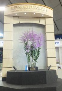 今年獲得蘭展日本大賞的作品「Epi. atacazoicum 'Mt. Iizuna'」