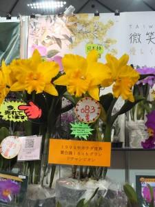 長穎農業帶來不少曾在各地獲獎的蘭花參展