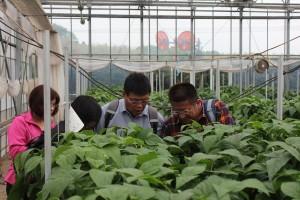 真剣に見学する台湾農家の皆さん
