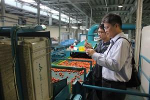 トマトの選果機を見学する行政院農業委員会台南区農業改良場副研究員の鐘瑞永さん(写真手前)