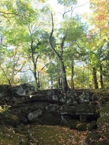 樂壽園內隨處可見植披從熔岩地層空隙中長出的地理景觀
