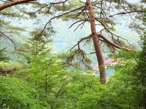 木々の合間に奥多摩湖が見え隠れ
