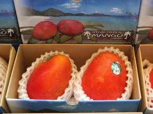 台湾マンゴーの主要生産品種・愛文(アーウィン)