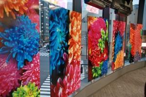 日本攝影師蜷川實花在台灣文化中心展出菊花系列作品